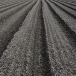 はじめての土づくり②:どんな畑にするのか考えよう