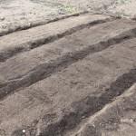 はじめての土づくり④:畝を作りマルチを張ろう