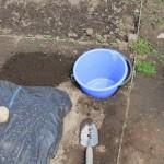 畑にバケツを植えた!?