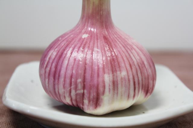 乾燥中のニンニクが紫色に変色