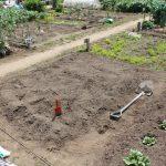 サツマイモの畝作り