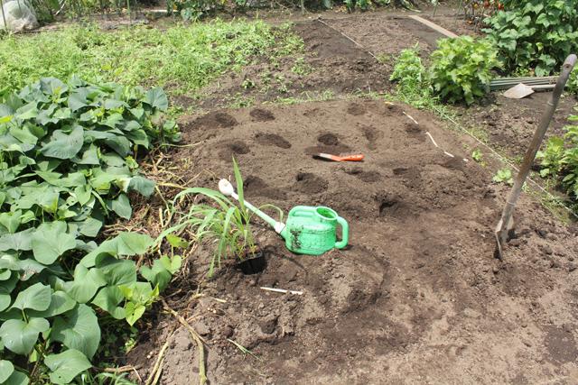 夏野菜定植前の畑