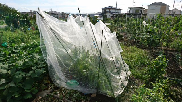 台風で防虫ネット崩壊